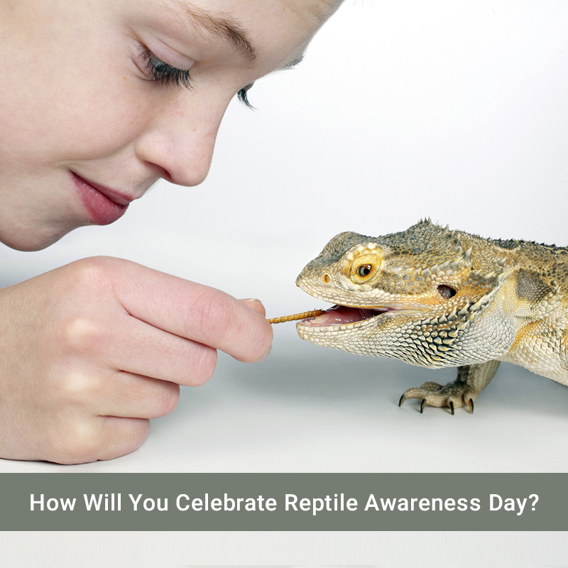 Blog-Post-How-Will-You-Celebrate-Reptile-Awareness-Day