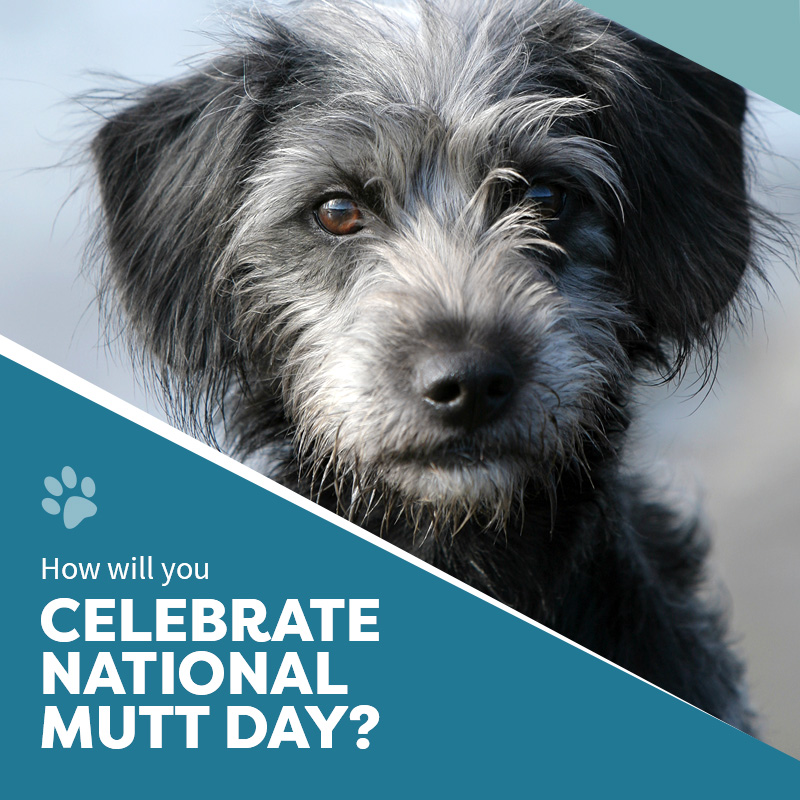Celebrate National Mutt-Day
