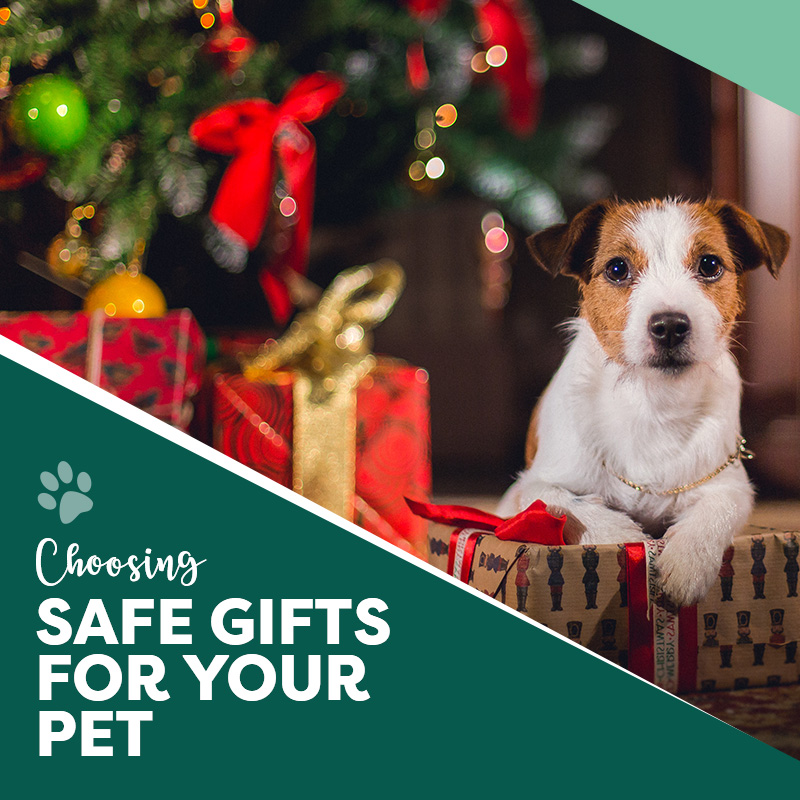 Choosing Safe Gifts for Your Pet