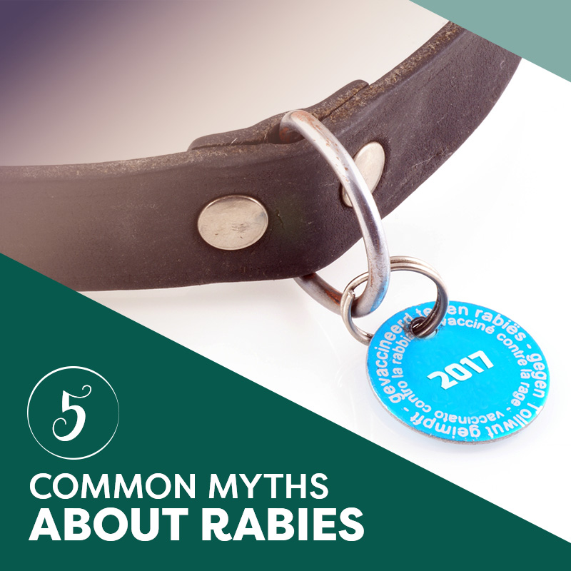 Five Common Myths About Rabies