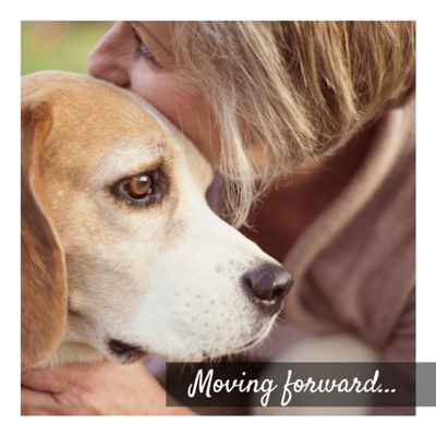 How to Move Forward After Pet Loss