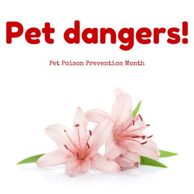 Welcome Spring--and an awareness of potential pet poisons!