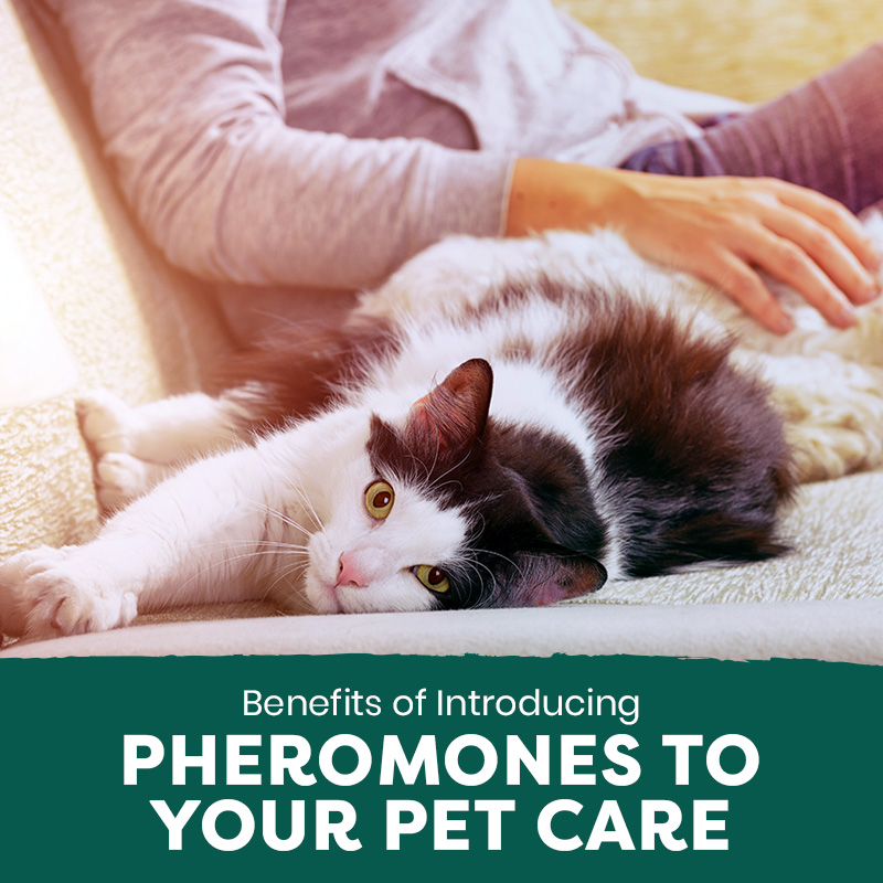 Benefits of Introducing Pheromones to Your Pet Care