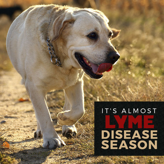 preview-full-Lyme-Disease-Season