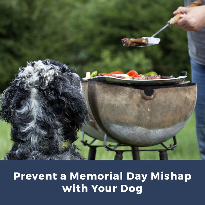Prevent a Memorial Day Mishap with Your Dog