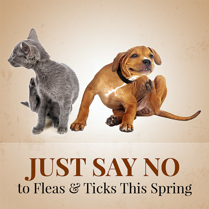 Just Say No to Fleas and Ticks This Spring