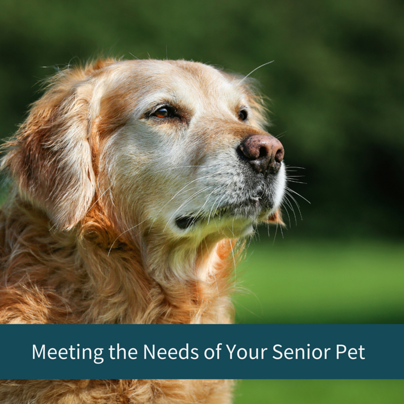 Meeting the Needs of Your Senior Pet
